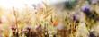 Leinwandbild Motiv wildblumenwiese natur sommer pastell sonne tau