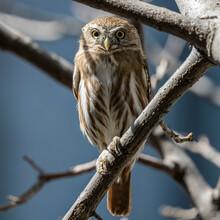 Title: Owl Post.  Species: Fer...