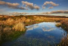 Marshland On The High Rugged Moors Of Dartmoor National Park In Evening Sunlight, Gidleigh Common, Near Chagford, Devon, England, United Kingdom