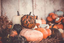 Pumpkins And Gourds