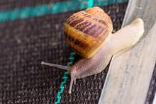 Snail Farm. Industrial Cultiva...
