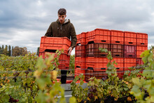 Young Winemaker Working To Pro...