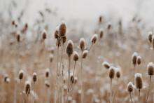 A Snowy Field In The Winter