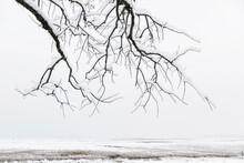 Gnarly Old Growth Tree In Winter Landscape