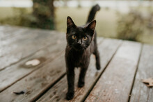 Curious Black Kitten