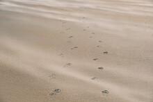 Footprints And Wind Blown Sand. Bamburgh Beach, Northumberland, UK.