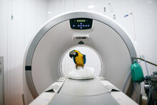 Veterinarians Doing An MRI To ...