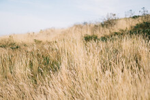 Field Of Long Dry Grass Backgrounds