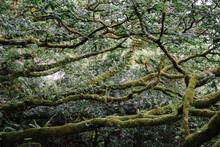 Tree Brances