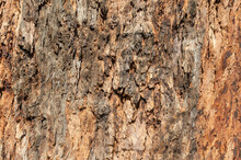Tree Bark Texture Closeup. Wooden Backdrop