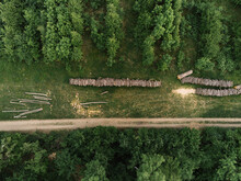 Forest From Above, Pile Of Wood