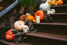 Pumpkins And Gourds On Stoop
