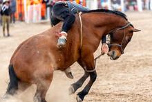 Bucking Horse In A Gaucho Rodeo
