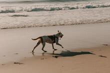 A Dog Running Along The Ocean ...