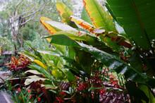 Tropical Garden During Wet Sea...