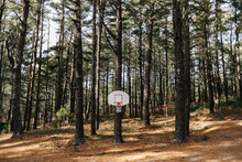 Basketball Court In Forest