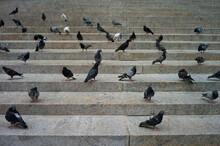 Pigeons Gathered On Steps In Manhattan. Urban Setting