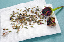 Saving Dried Zinnia Flower Seeds