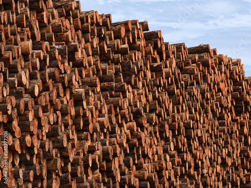 Logging Wood