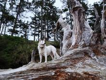 Dogs On Coast