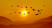 Sandhill Cranes In Flight At S...