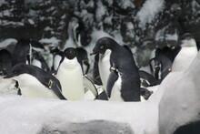 Penguins In Polar Regions