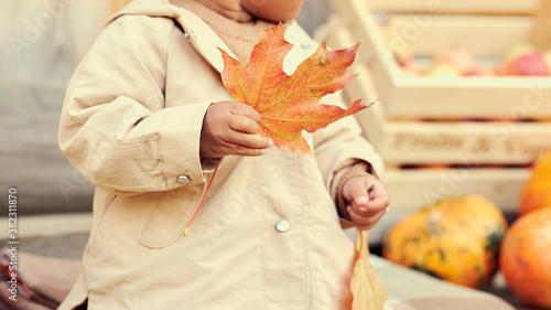 Obraz na plátně little girl playing with autumn leaves