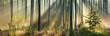 Leinwandbild Motiv Beautiful Panoramic Sunny Forest in Autumn with Sunbeams through Fog
