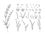 Hand drawn design elements lavender in sketch style.