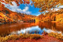 Autumn In The Park. Golden Aut...