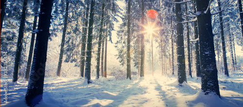 Fototapeta Christmas Holiday Background. Winter sunshine through trees in forest. obraz