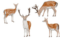 Set Of Male And Female European Fallow Deer. Deer Dama Dama. Wild Animals Of Europe, America And Scandinavia. Vector Illustration