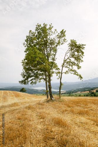 Fototapeta Alberi in collina campagna Italiana vista lago obraz na płótnie