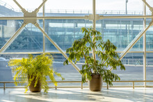 Decorative Plant Trees In Pots...