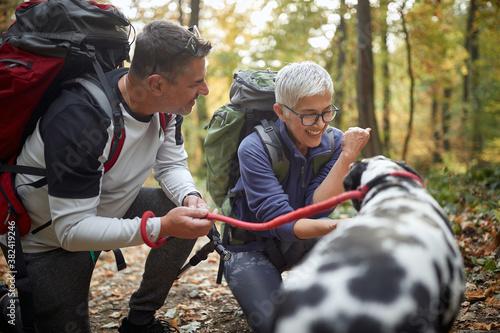 Fototapeta Senior couple hiking with the dog; Active retirment lifestyle obraz