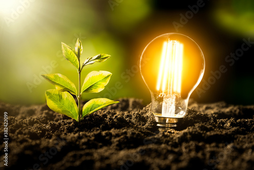 Obraz Eco environment, abstract lighting bulb concept - fototapety do salonu