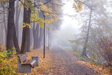 Foggy Landscape. Autumn Alley ...