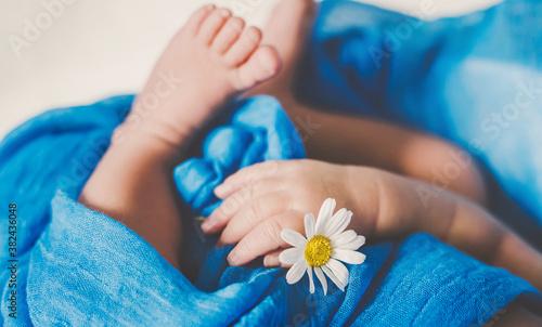 Fototapeta Newborn baby is holding a chamomile flower. Selective focus. obraz