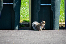 A Squirrel Looking At The Camera On A Blacktop Driveway In Front Of A Trash Can