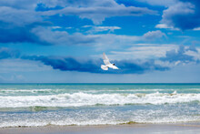 A White Seagull Flies Over A Sandy Beach, In The Background An Azure Sea With Waves And Blue Cloudy Skies