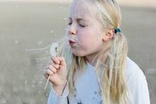 Little Girl Blowing A Dandelion 'clock'