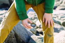 Child Holding Chiton Shell