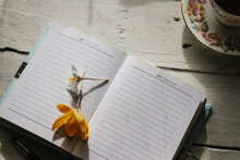 Crocus Flowers On A Journal That Is Open At A Page In February
