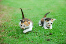 Cute Domestic Kitten On Green Grass