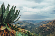 Aloe With A Scenic Valley View In The Background