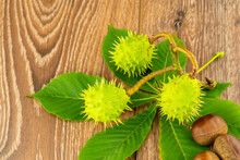 Branch Of Green Chestnut With ...