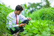 Leinwandbild Motiv Technology and people concept, Young indian agronomist with tablet at field