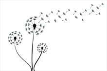 Dandelion Logo Vector Illustration. Dandelion Icon