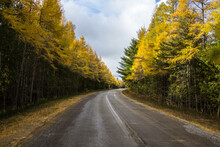 Autumn Road Trip. Paved Countr...