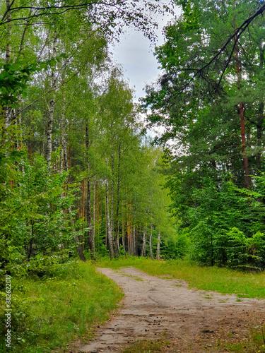 Fototapeta Na skraju lasu, połączenie obraz